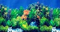 Фон для аквариума высота 30 см (рулон длина 15 м) HL-BHWG12