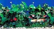 Фон для аквариума высота 30 см (рулон длина 15 м) HL-BPWG12