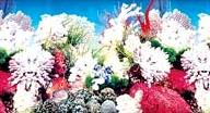 Фон для аквариума высота 30 см (рулон длина 15 м) HL-BWC12