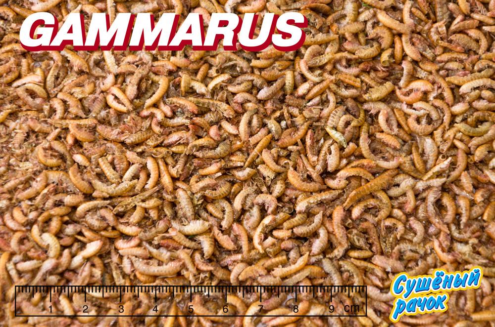 ГАММАРУС сушеный рачек (Gammarus pulex) корм для крупных рыб и водных черепах (МЕШОК 10 кг) 911303