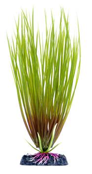 Гелеохарис (21,25 см) P16MH