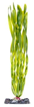 Валиснерия (27,5 см) P17LH