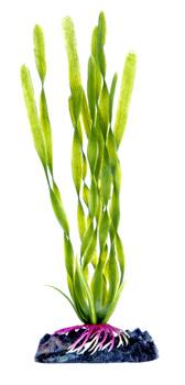 Валиснерия (17,5 см) P17SH