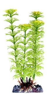 Амбулия зеленая (21,25 см) P18MH