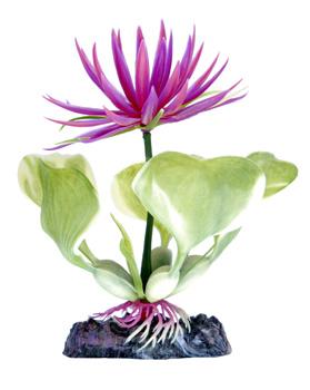 Гиацинт розовый (10 см) P22BH