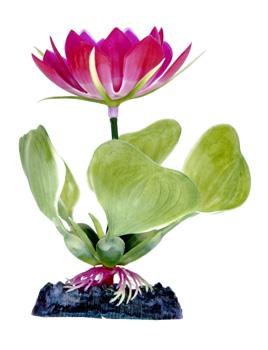 Кубышка розовая (10 см) P23BH