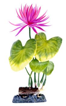 Гиацинт розовый (21,25 см) P2MH