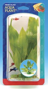 Эхинодорус куст (12*15 см) P32ZS