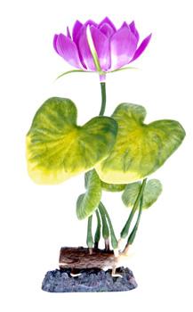 Кубышка розовая (21,25 см) P3MH