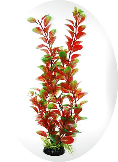 Людвигия красно-зеленая 80 см (919180)